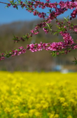 春の密度だ増している!