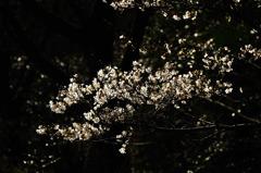花灯り Ⅱ