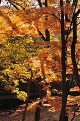 竹の山の紅葉