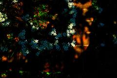 花壇の花Ⅱ