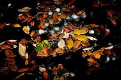水・落ち葉Ⅱ