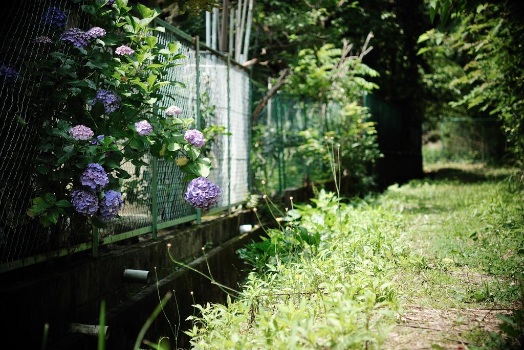 紫陽花のある風景