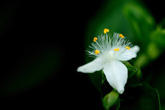 Tiny White Ⅱ