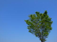 空と風と緑