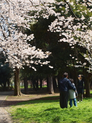 2010-sakura