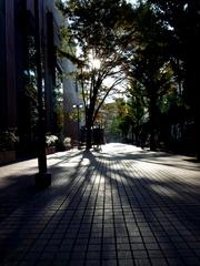 tree - shade