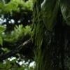 雨の庭06(固定された時間)
