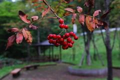 秋のあしおと