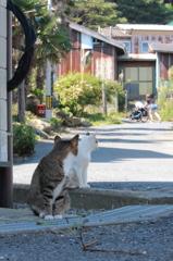 「猫の手も」「貸しますぞ?」