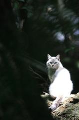 神域の森猫。