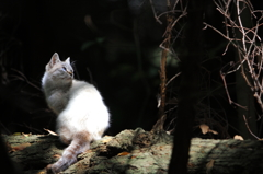 神域の森猫2。