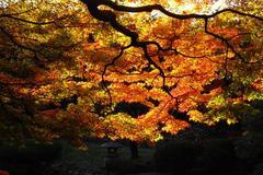 紅葉の東京都庭園美術館②