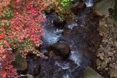 紅葉・・・kirishima