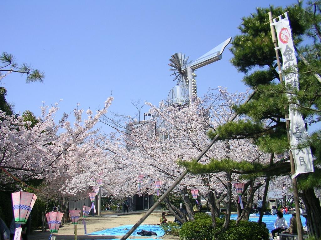 桃山公園の風車と桜