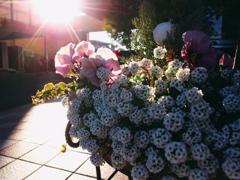 光差し込む花