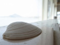 貝殻の向こう