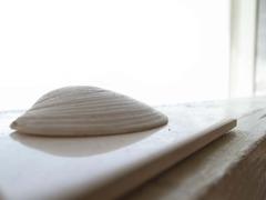 窓辺の貝殻