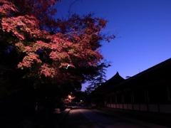 夕空に見た紅葉
