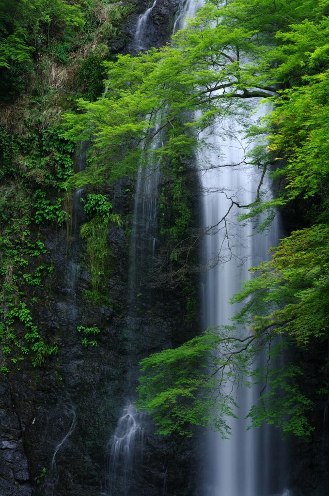 箕面滝(三)