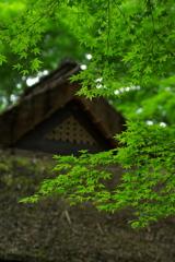 茅葺と新緑