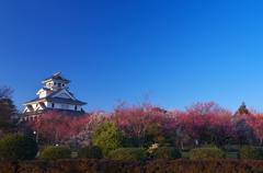 梅と長浜城(壱)