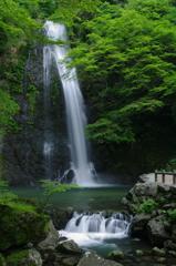 箕面滝(一)