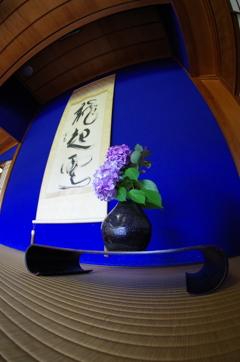 床の間の紫陽花