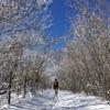 雪の道と青い空