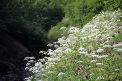 登山道を彩る花