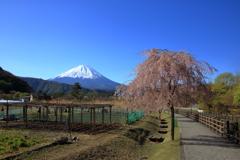 富士山が見える里