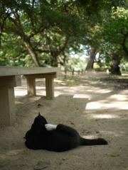昼下がりの野良猫