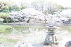日本庭園-桜-