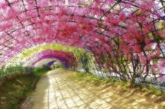 河内藤園 2011-05-05