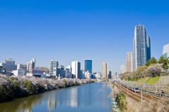 桜の川を望む