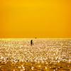 黄金の海へ
