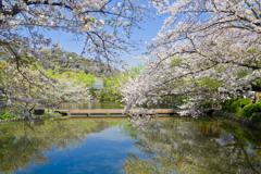 源平池の春