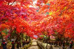 丹沢  大山寺の紅葉
