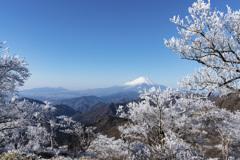 丹沢山に咲いた冬の華