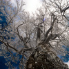 丹沢の樹氷