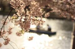 弘前公園の西堀