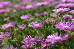 大石公園の花