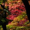 諏訪峡の秋