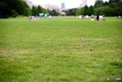 芝生でのんびり