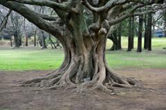 迫力ある木の造形
