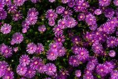 真上から見た花