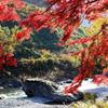 赤葉の渓谷
