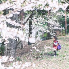 桜のかんさぁ