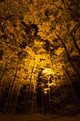 summer camp - 夜景