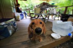 summer camp - 大きい鼻