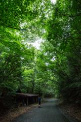 summer camp - 昆虫採集